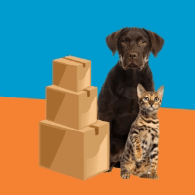 Cats and dogs website featured image